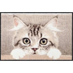 salonlöwe-fussmatte-wohnung-eingangsbereich-nosy-cat--waschbar