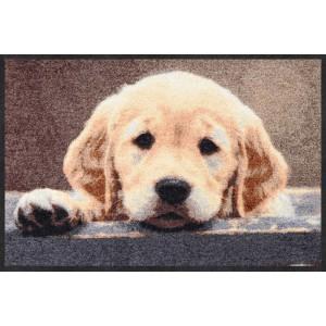 salonlöwe-fussmatte-wohnung-eingangsbereich-nosy-dog-waschbar