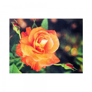 Sun & Fun Teppich Rose Premium
